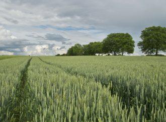 Un patto per i giovani e l'agricoltura italiana