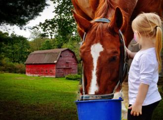 In fattoria si respira salute e s'impara