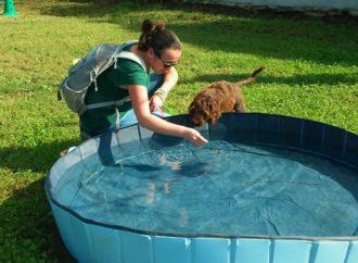 Come insegnare a cani e gatti a comportarsi bene