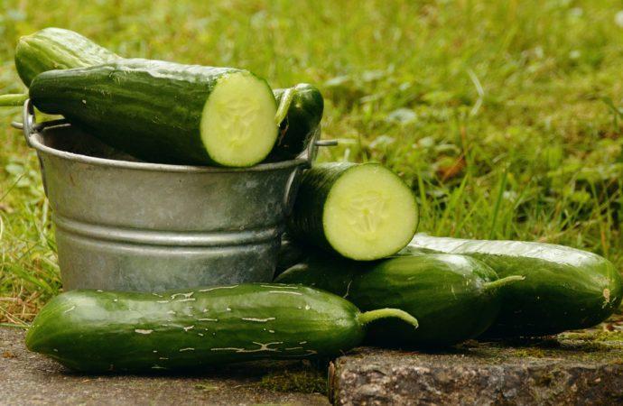 Come difendere l'orto con i metodi naturali