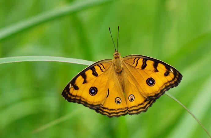 Vieni anche tu a guardare le farfalle nel Parco del Ticino