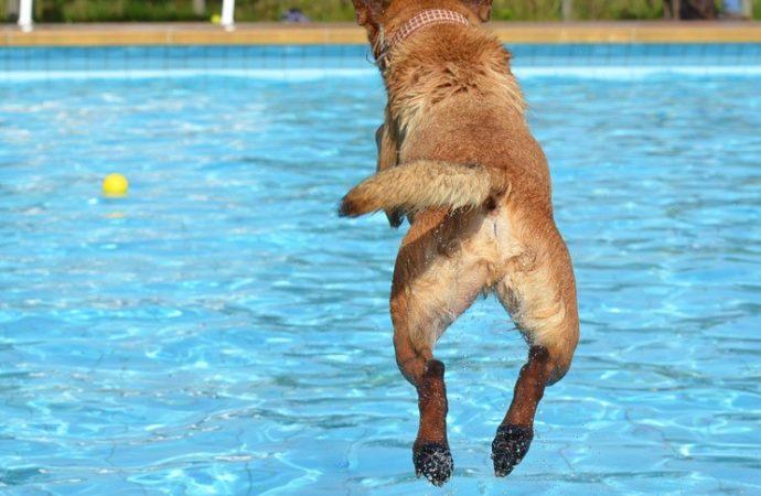 È estate anche per fido, portalo in piscina