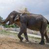 Al Safari Park Lago Maggiore è arrivata Maya