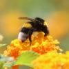 Api e miele: risorse della Terra, ricchezza a rischio