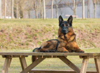 Regione: 380 mila euro per addestrare i cani guida