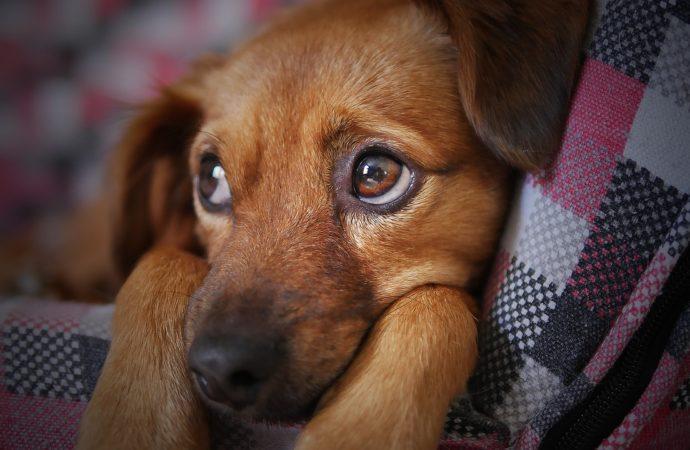 """""""Ogni lasciata è pestata"""", contest social sui cani"""