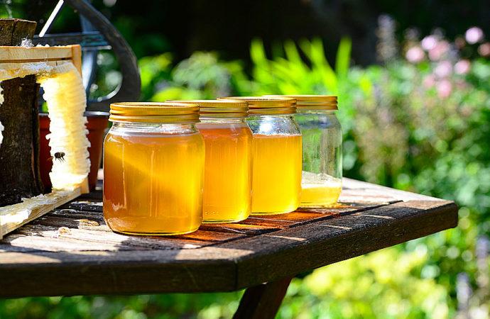 Dallo studio del DNA del miele un aiuto all'ambiente