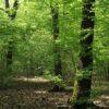 Parco Ticino: a Bernate rivivrà il bosco antico