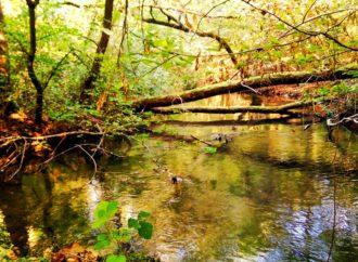 Passeggiare in mezzo alla natura per tornare in forma