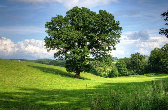 Foreste lombarde, si studia come proteggere le querce